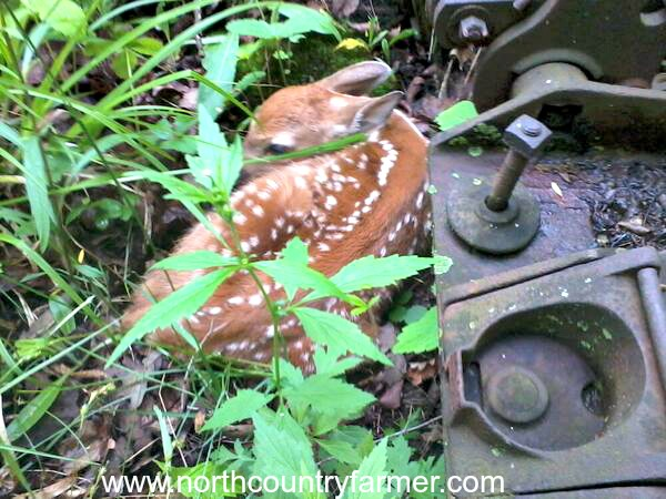 fawn2NCF